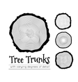 Cross section of the trunk vector image vector image