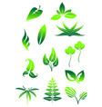 icon leaves vector image
