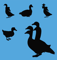 duck geese silhouette collection vector image vector image