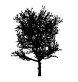 red apple tree silhouette vector image