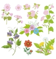 Cultivated flowers set vector image