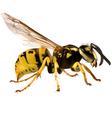 Hornet vector image