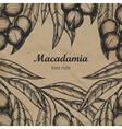 Macadamia branch design template Engraving vector image