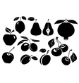 Set of different fresh fruit vector image