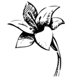 Lily flower sketch vector image