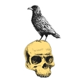 raven on the skull vector image