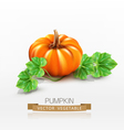 pumpkin isolated on white background vector image vector image