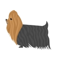 Dog yorkshire terrier vector image