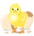 Newborn Chick vector image