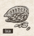 background with cocoa fruit vector image