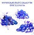 Hand drawn watercolor grape set vector image
