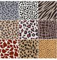 Animal skin seamless pattern vector image