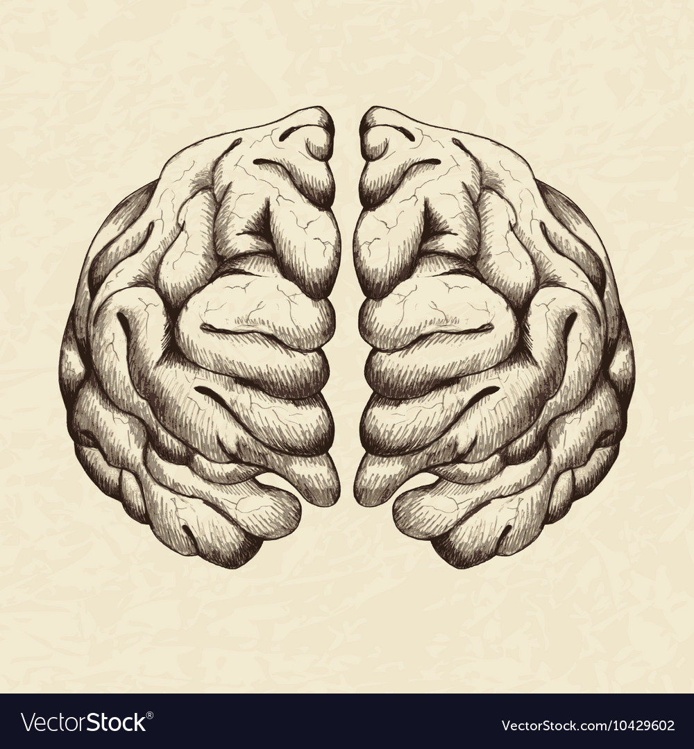 Sketch of human brain vector