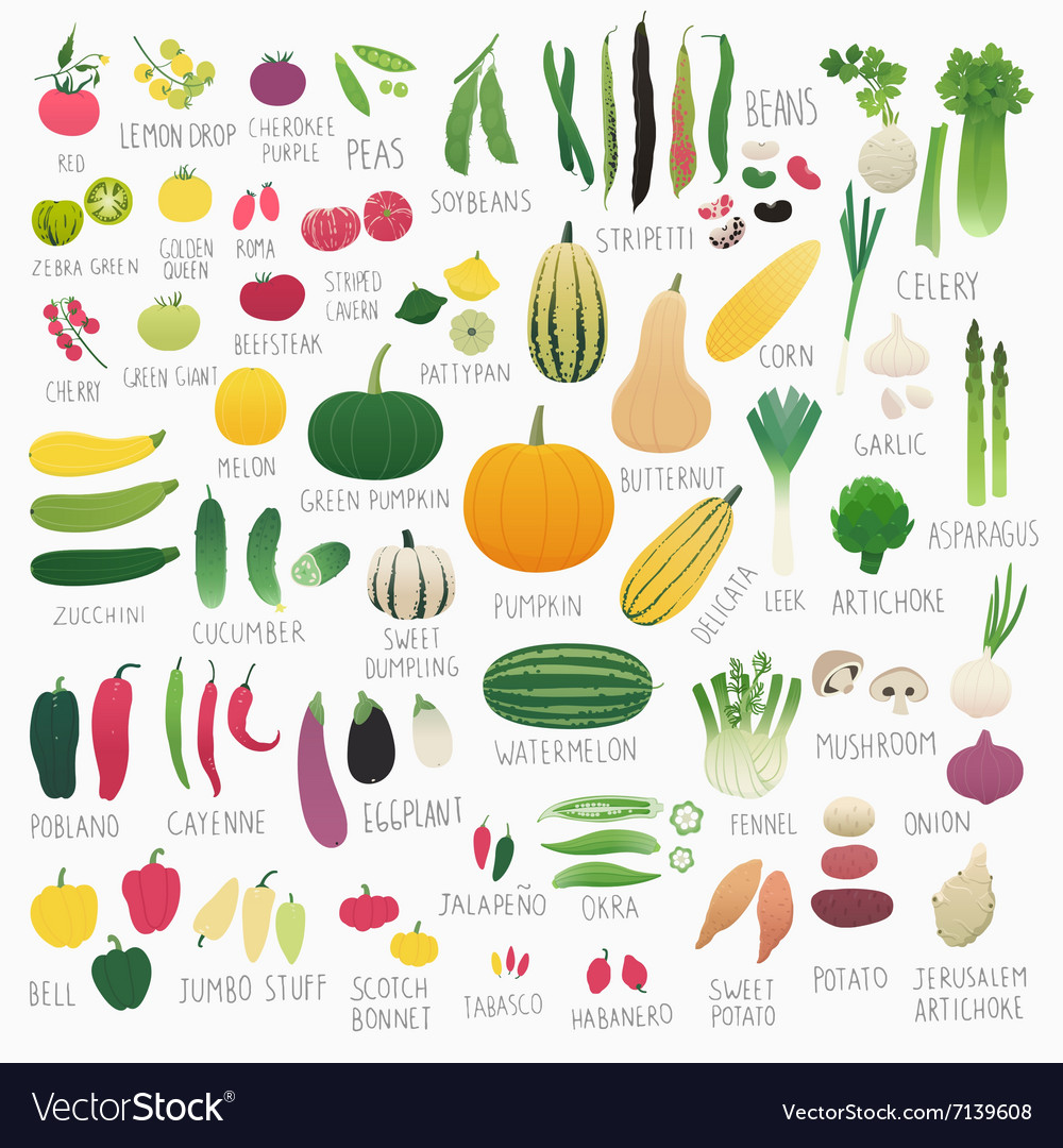 Food vol 2 vegetables vector