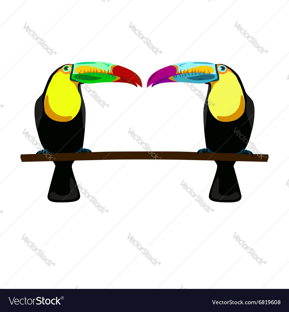 Two toucans on white background vector