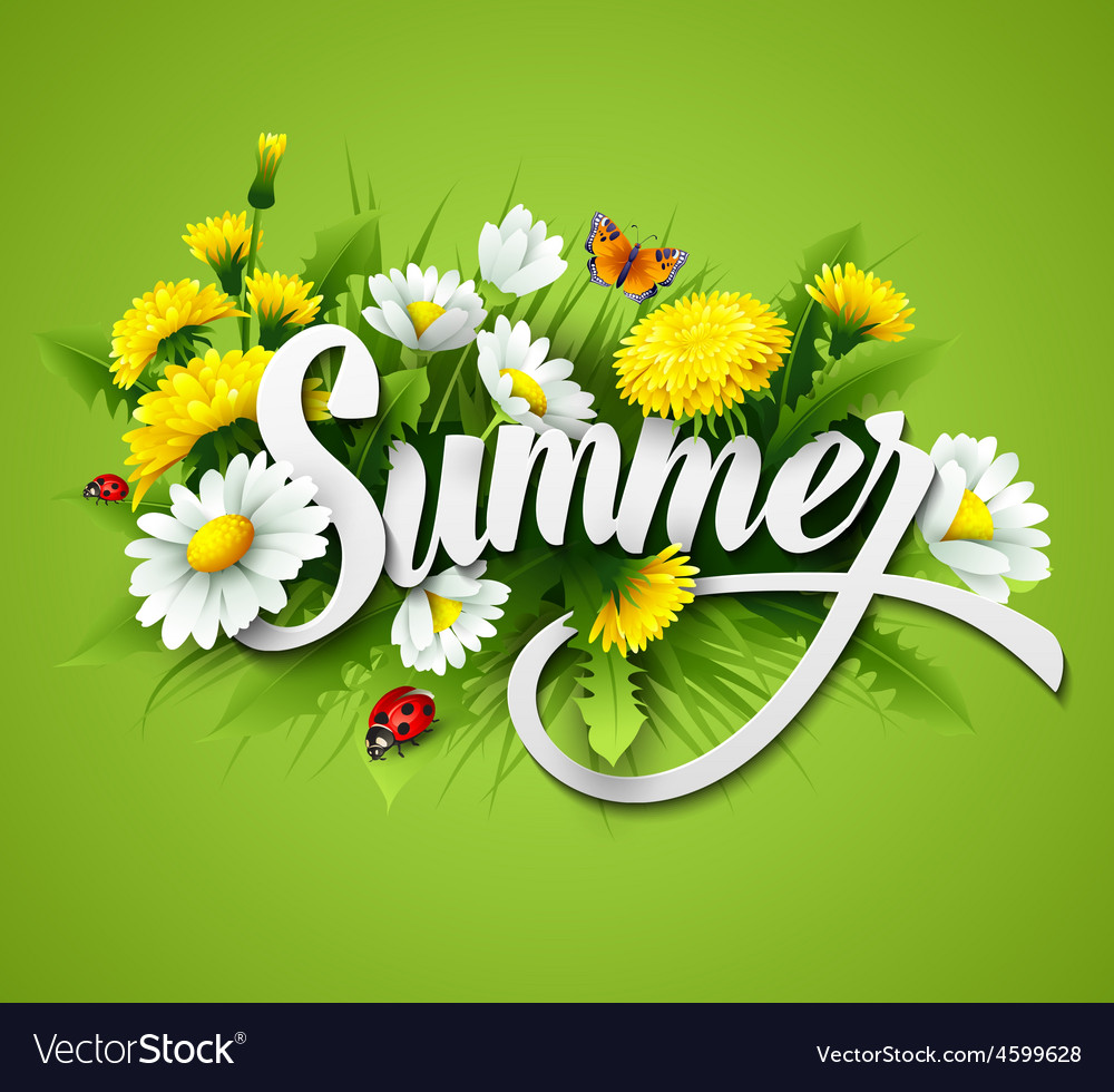 Fresh summer background with grass dandelions and vector