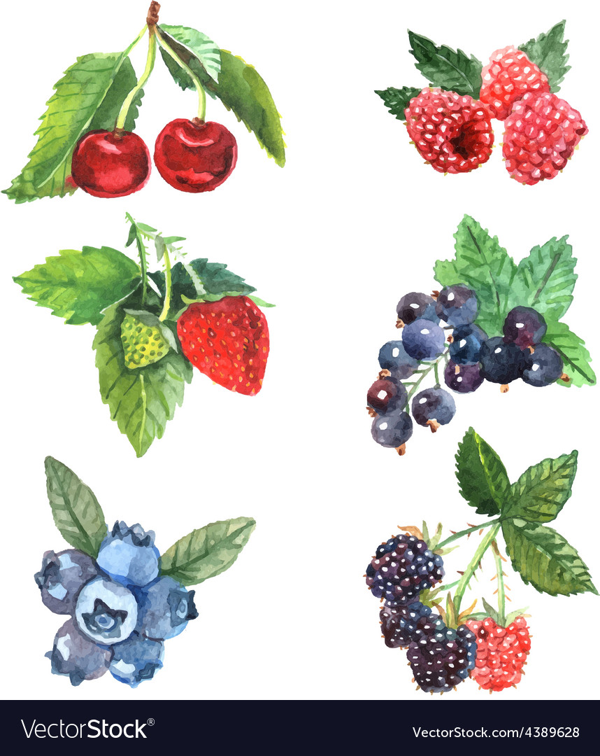 Watercolor berry set vector