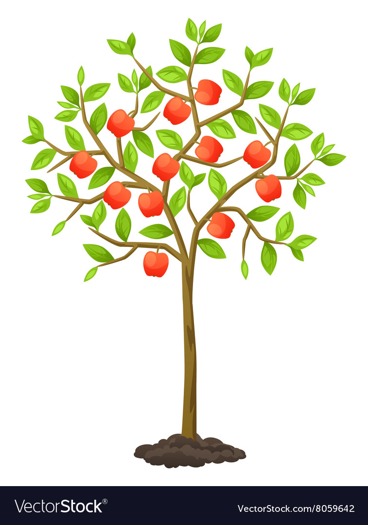 Fruit tree with apples for vector