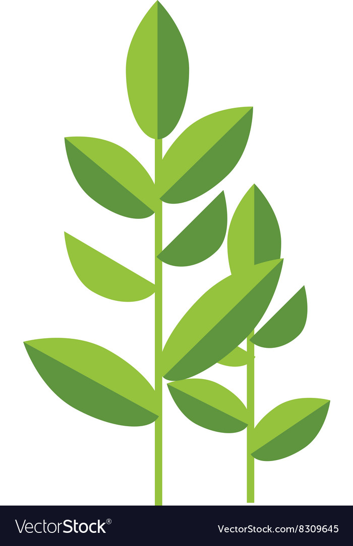 Nature tea plant green leaves isolated on vector