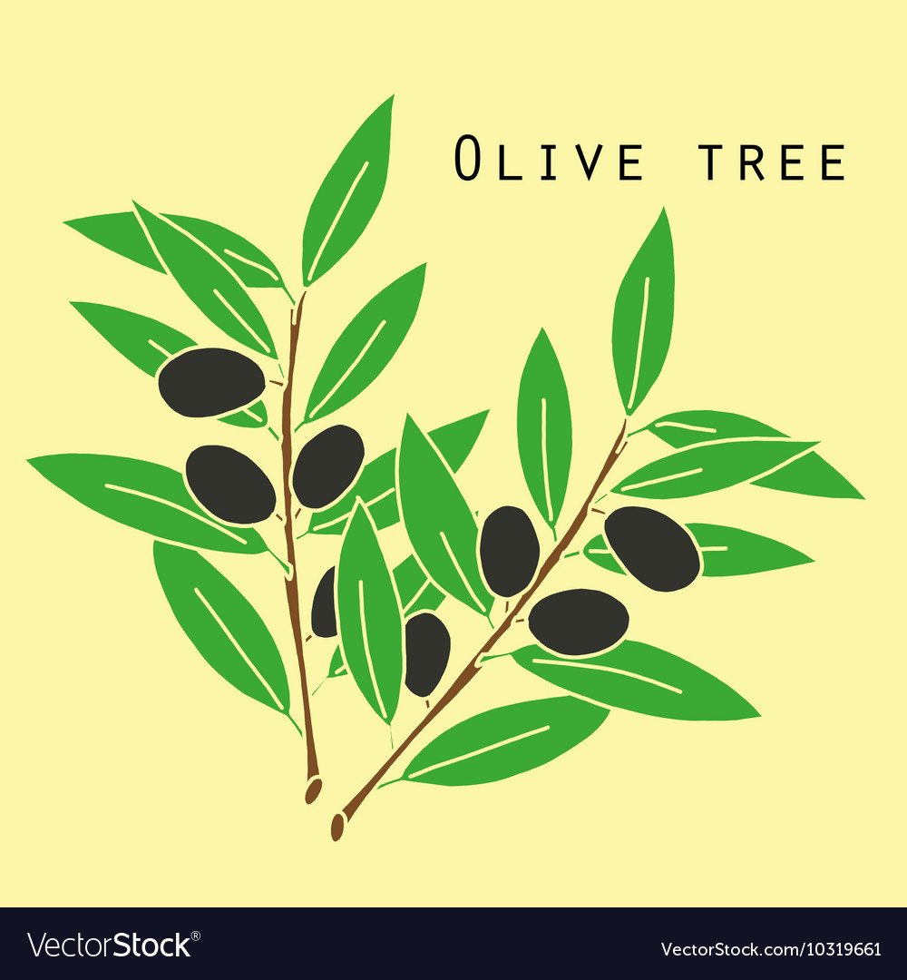 Two olives branches vector
