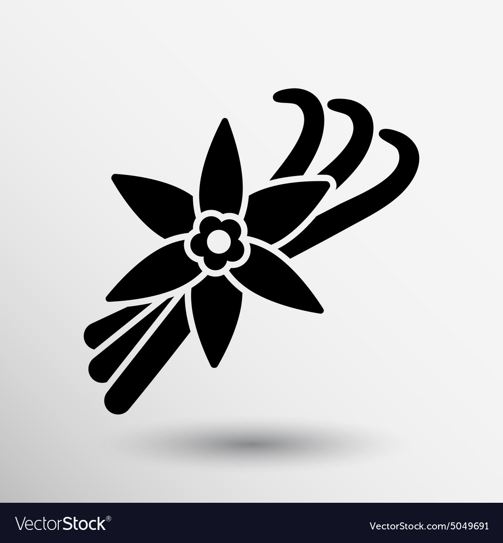 Vanilla flower and vanilla pods logo vector