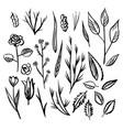 floral designs detail sketc vector image