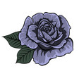 blue roseisolated rose single rose vector image