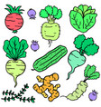 collection stock of fresh vegetable doodles vector image
