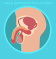 Diagram of the male reproductive system vector image