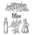 set olive bottle glass branch with leaves rural vector image