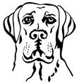 labrador vector image