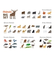 Animals in flat style vector image