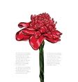 Etlingera tropical flower on a white vector image