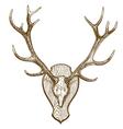 engraving deer skull with horns vector image