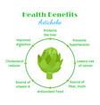 artichokes health benefit organic farm product vector image