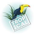 beautiful toucan over tropical palms vector image