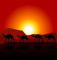 Silhouettes of caravan of camels on desert sunset vector image