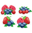 forest fruits raspberry strawberry blueberry vector image