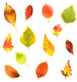 Big Set Leaves vector image