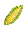 corncob sketch for your design vector image