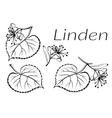 Linden Leaves Pictogram Set vector image vector image
