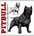 american pit bull terrier pitbull vector image