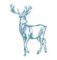 hand drawn deer big antlers wildlife poster blue vector image