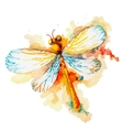 Orange Watercolor Dragonfly vector image