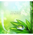 green background with leaves and dew drops vector image