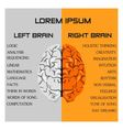 brain side function vector image vector image