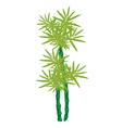 Beautiful Isometric of Green Bamboo Tree vector image