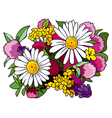 Bouquet of wild flowers vector image