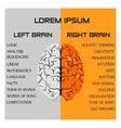 brain side function vector image