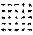Bull silhouettes set vector image